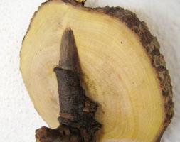 Percha de tronco